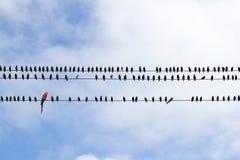 Pájaros en un alambre/un modelo Foto de archivo