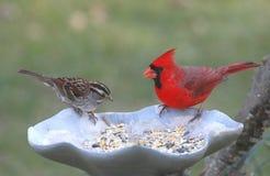 Pájaros en un alimentador Imagen de archivo libre de regalías