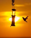 Pájaros en un alimentador en la puesta del sol Imagenes de archivo
