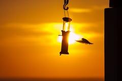 Pájaros en un alimentador en la puesta del sol Imagen de archivo libre de regalías