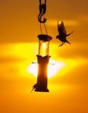 Pájaros en un alimentador en la puesta del sol Imagen de archivo