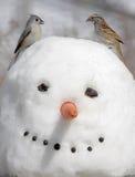 Pájaros en un muñeco de nieve Imagen de archivo