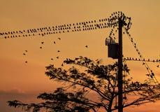 Pájaros en un polo de poder Foto de archivo