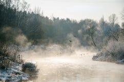 Pájaros en un río congelado Imagen de archivo libre de regalías