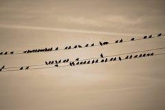 Pájaros en una línea Imágenes de archivo libres de regalías