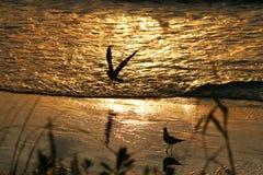 Pájaros en una playa de oro en el día Imagenes de archivo