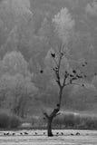 Pájaros en una rama Foto de archivo libre de regalías