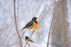 Pájaros en una rama Fotografía de archivo libre de regalías