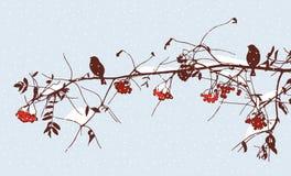 Pájaros en una rama del serbal en invierno Fotos de archivo