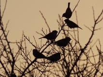 Pájaros en una rama en la puesta del sol Imagen de archivo libre de regalías