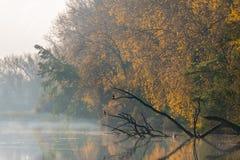 Pájaros en una rama sobre el lago de niebla Fotos de archivo libres de regalías