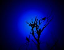 pájaros en una ramificación Fotografía de archivo libre de regalías
