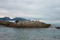 Pájaros en una roca, Kaikoura Fotos de archivo libres de regalías