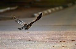 ¡Pájaros en vuelo! Imágenes de archivo libres de regalías