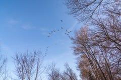 Pájaros en vuelo Fotografía de archivo libre de regalías