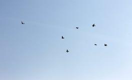 Pájaros en vuelo Imagenes de archivo