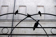 Pájaros encaramados en la estructura metálica Fotos de archivo