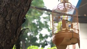 Pájaros enjaulados de la canción para la venta en jaulas en las calles del viejo cuarto del capital, Hanoi, Vietnam
