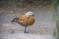 Pájaros exóticos Fotos de archivo