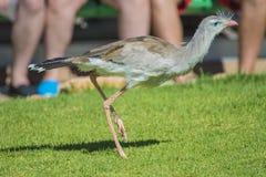 Pájaros exóticos Fotografía de archivo libre de regalías