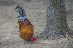 Pájaros exóticos Imagen de archivo libre de regalías