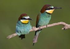Pájaros exóticos hermosos Foto de archivo libre de regalías