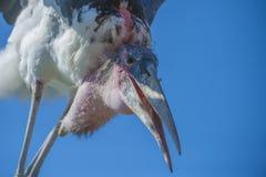 Pájaros exóticos, primer Imagen de archivo libre de regalías
