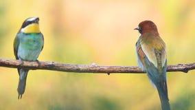 Pájaros exóticos que se sientan en una rama en la luz de la mañana metrajes