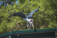 Pájaros exóticos, volando Imagenes de archivo
