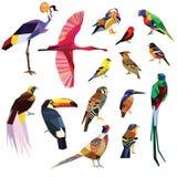 Pájaros fijados Foto de archivo