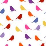 pájaros fondo inconsútil del bebé con los pájaros del color Fotografía de archivo