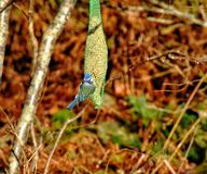 Pájaros hermosos Imagenes de archivo