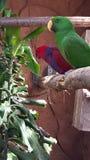 Pájaros hermosos Foto de archivo libre de regalías