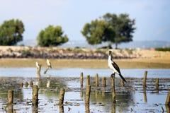 Pájaros hermosos Fotografía de archivo
