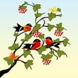 Pájaros hermosos en la ramificación Imágenes de archivo libres de regalías
