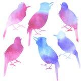 Pájaros inconsútiles del canto de la acuarela del modelo ilustración del vector