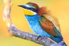 Pájaros increíblemente hermosos en la salida del sol Imagen de archivo libre de regalías