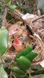 Pájaros lindos Foto de archivo