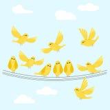 Pájaros lindos del vector del amarillo común del ejemplo, nubes blancas en azul Fotos de archivo libres de regalías