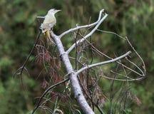 Pájaros maravillosos en el árbol imagen de archivo libre de regalías