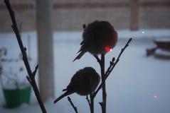 Pájaros minúsculos Imagen de archivo libre de regalías