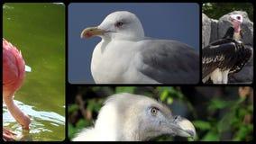 Pájaros, montaje almacen de video