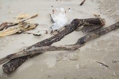 Pájaros muertos en la playa Imagen de archivo