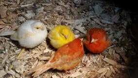 Pájaros multicolores Imagen de archivo libre de regalías