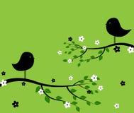 Pájaros negros Imagen de archivo