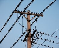 Pájaros negros en los alambres eléctricos Imagenes de archivo