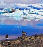 Pájaros polares en la orilla de la laguna del océano Fotografía de archivo