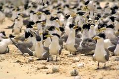 Pájaros por todas partes Foto de archivo