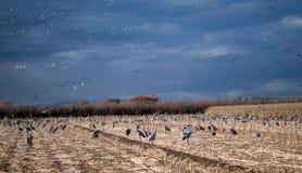 Pájaros, pájaros por todas partes, en la tierra y en el cielo fotografía de archivo libre de regalías