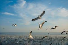Pájaros que arrebatan la comida en cielo Fotos de archivo